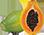 dentiblanc-papaya-logo.png